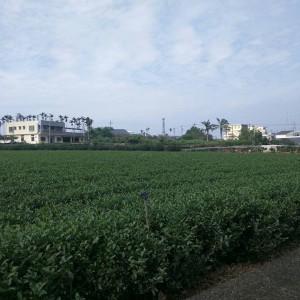 mingjianfarm
